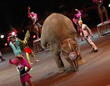 Elephant_headstand
